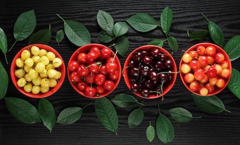 Wiśniowe LOVE – skarbnica wiedzy dla miłośników wiśni